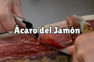 Ácaros: los bichos que estropean el jamón