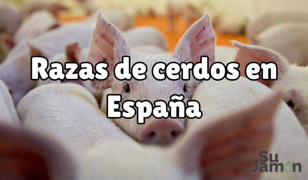 Razas de cerdos en España